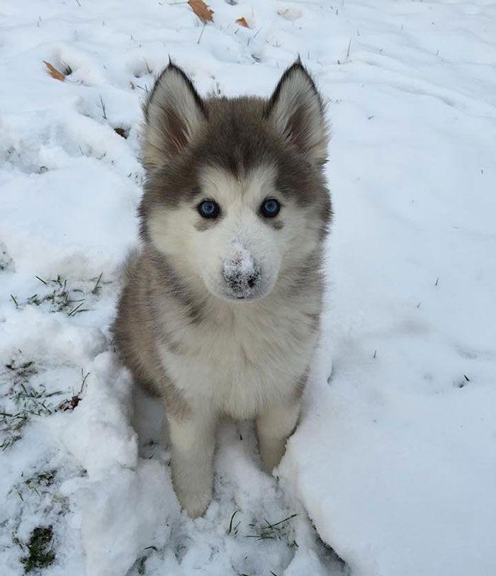 『初めての雪』に触れた動物の赤ちゃんたちが可愛すぎる20選 - ペット日和