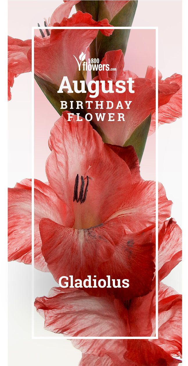 August Birth Flower August Birth Flower Birth Flowers Plant Gifts