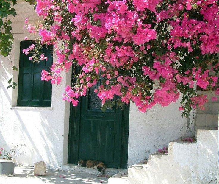 Green and pink with cat on the doorstep  (Myrto, a picturesque village by the seashore of southeastern Crete near Ierapetra)