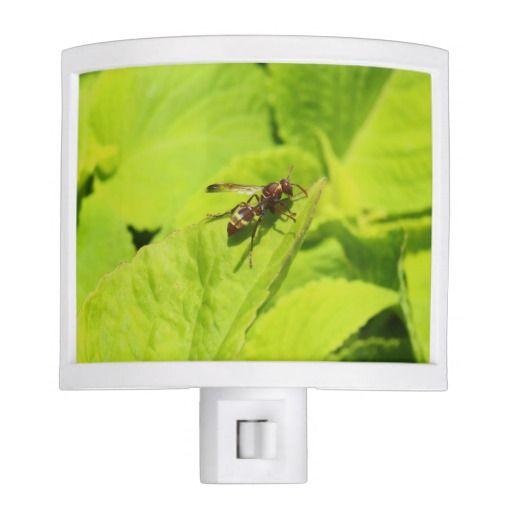 Vespidea paper/Potter wasp night light.