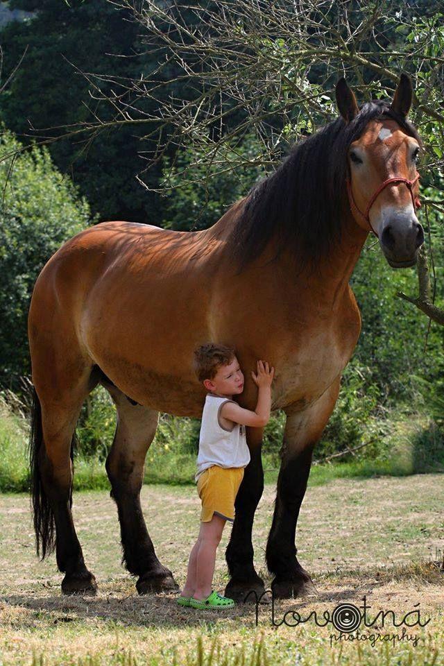 I love gentle giants!
