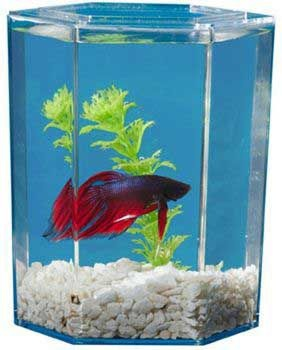 83 Best Fish Tanks To Admire Ideas Images On Pinterest