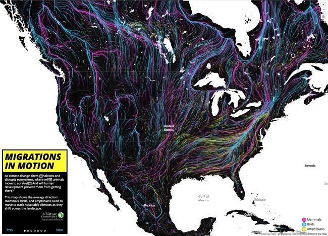 Animal Migrations In Motion animated & interactive data visualization