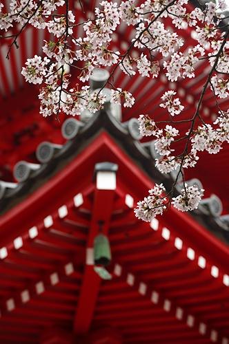Spring in Daikakuji 大覚寺 temple, Kyoto, Japan.