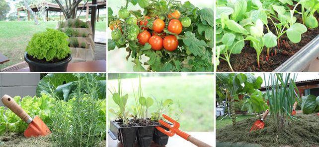 Curso online ensina como fazer horta em casas e apartamentos