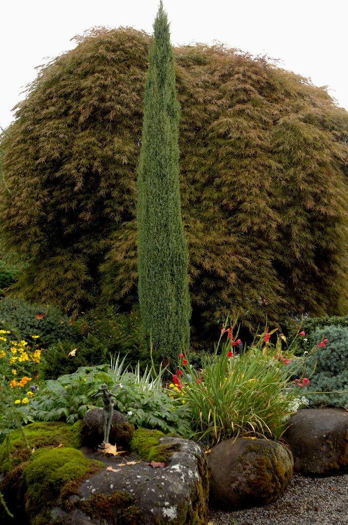 Pin By Bickimer Homes On Model Homes: Chamaecyparis Lawsoniana 'Ellwoodii' (Lawson False Cypress