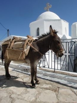 We had a donkey out side our apartment on our hunny moon in Lesbos Greece 20 yrs ago My hubby loves them.