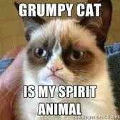 I Am The Grumpy Cat!