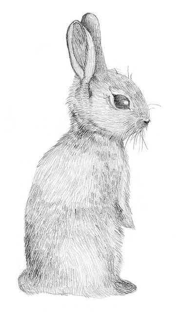 Rabbit www.lab333.com https://www.facebook.com/pages/LAB-STYLE/585086788169863 http://www.labs333style.com www.lablikes.tumblr.com www.pinterest.com/labstyle
