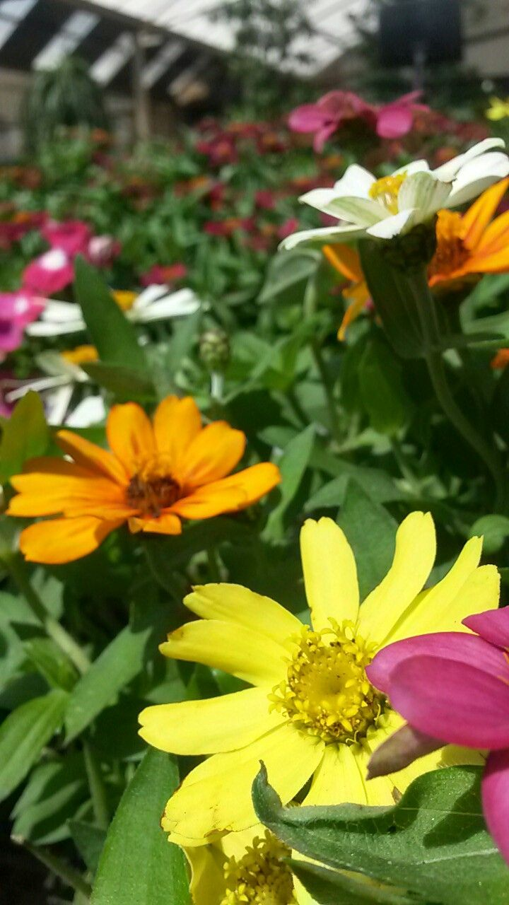 Beautiful Brightly Coloured Flowers!! #summervibes Monique