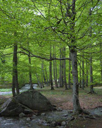 Bosc de Conangles