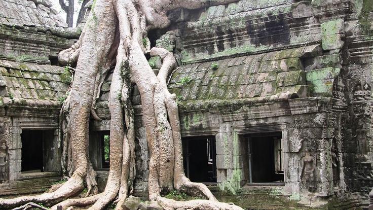 Ta Prohm Temple Tourism in Cambodia - Next Trip Tourism