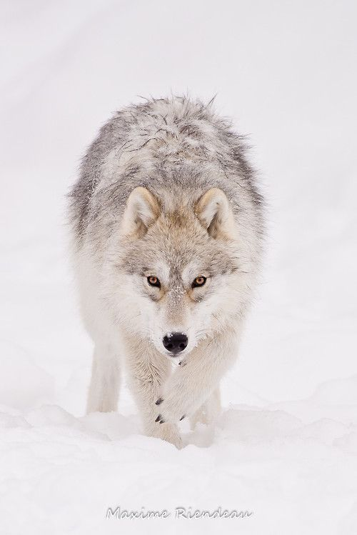 (via 500px / Face to face by Maxime Riendeau)