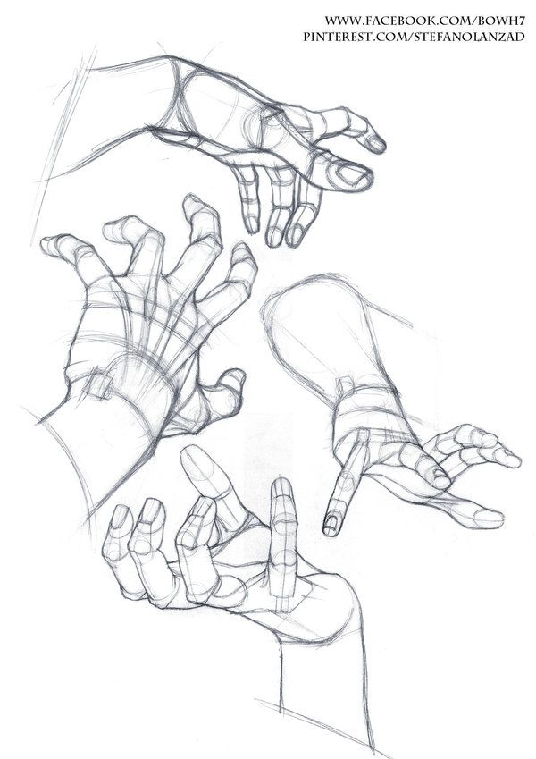 how to draw anatomy pdf