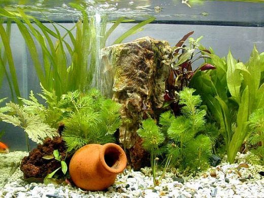 I love fishes and I have planted my own aquarium at home.  You too can do it.  In order to create your own planted aquarium at home, follow the steps below.     First you have to decide the size of the tank to set up a planted aquarium. For example:...