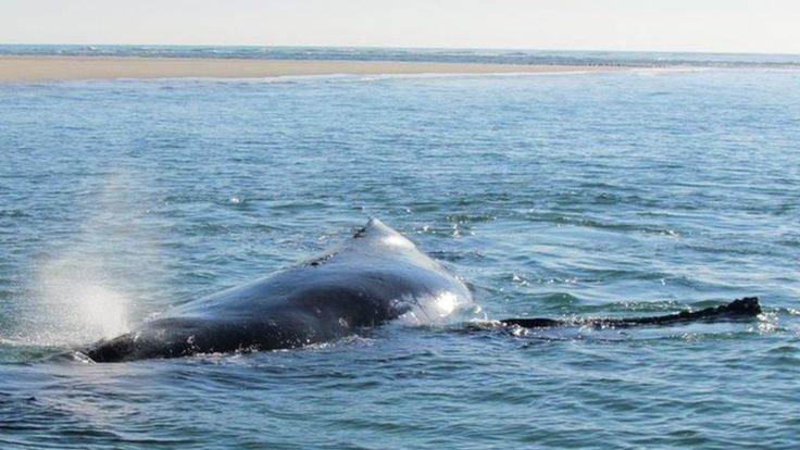 A humpback whale which was stranded on a sandbank off Australia frees itself after its calf was filmed apparently pushing her into deeper water.