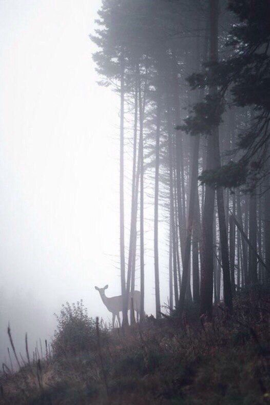 A deer in a foggy forest. #Deer #Animals #Nature #…