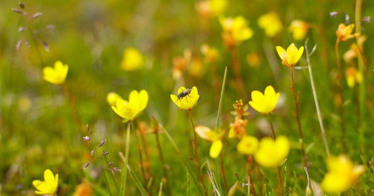 ¿Qué tipos de flores hay en el bioma de la tundra?. El bioma de tundra, que se caracteriza por temperaturas muy crudas, vientos secos y precipitaciones insignificantes, se encuentra en el Ártico y en las cimas de las altas montañas. A pesar de la dureza del clima, la tundra florece en su corto verano, cuando la capa superficial del suelo se derrite. El paisaje cambia drásticamente de un terreno ...