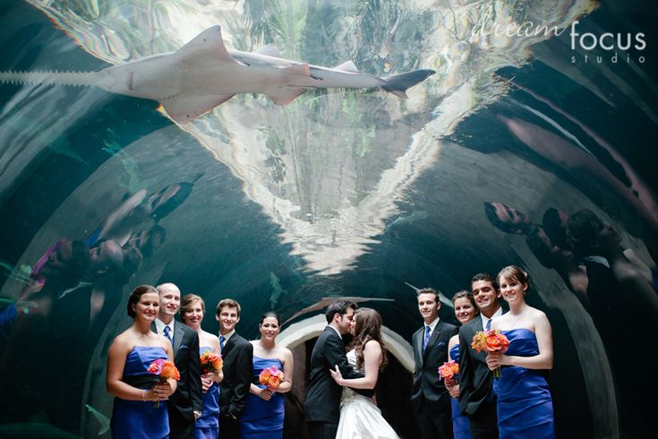 17 Best Images About Aquarium Based Wedding On Pinterest