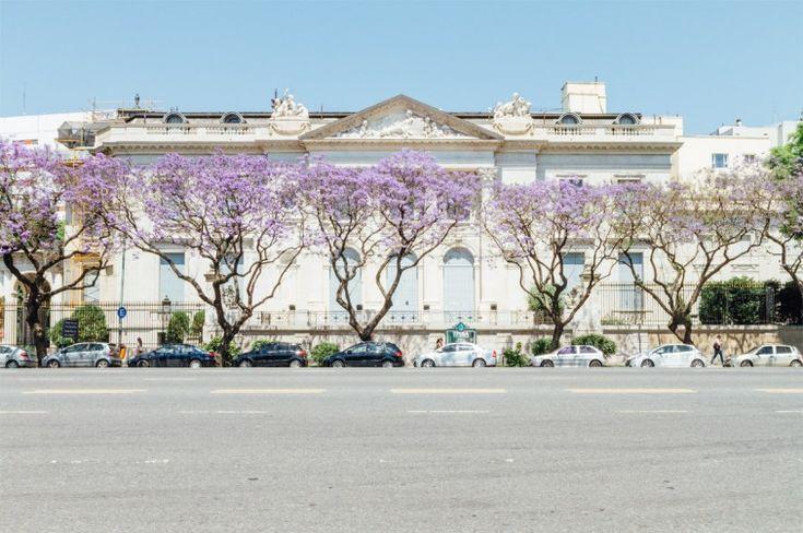 Jacaranda-Bäume auf der Avenida Libertador | Buenos Aires light – Der perfekte Spaziergang zum Einstieg, Stilnomaden