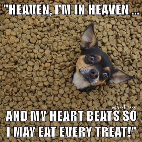 Pinterest Animal Quotes: 438 Best Funny Animal Sayings Images On Pinterest