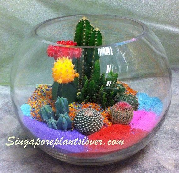 Items Similar To Cactus Terrarium Color Sands Minature Garden On Etsy
