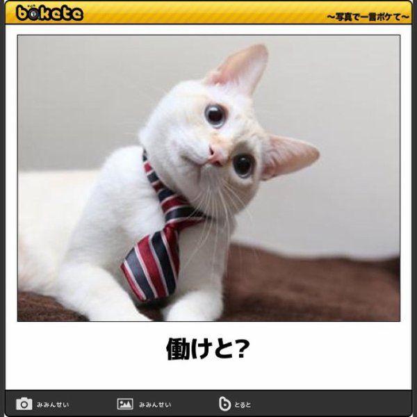 boketeというサービスから、珠玉の動物ボケを厳選しました。腹筋崩壊、間違いなしwww 説明は、、、いりません。