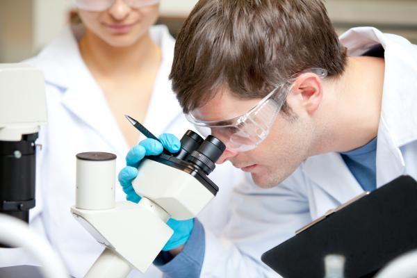 Confirmado: DNA de alimentos geneticamente modificados são transferidos para os humanos que os ingerem