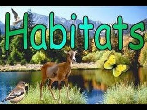 Habitats of Animals - What is a Habitat? - Video Lesson & Quiz for kids. [Large Group/Individual]