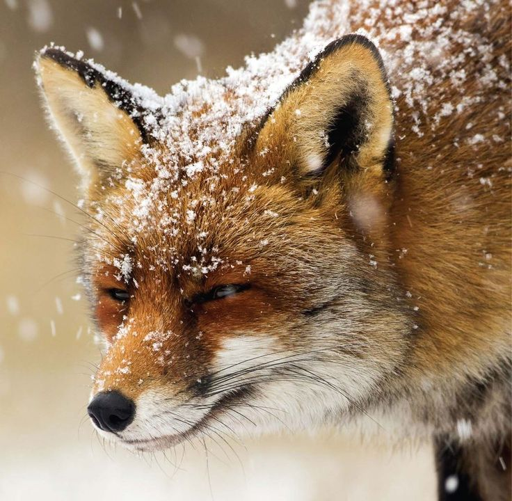 12 best Nature Wildlife Christmas Cards images on Pinterest ...