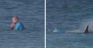 Un surfeur attaqué par un requin. Il ne sera pas blessé. ouf !
