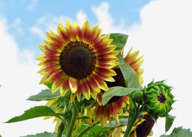 Butterfly Season Flower Garden Planting Flowers Plants