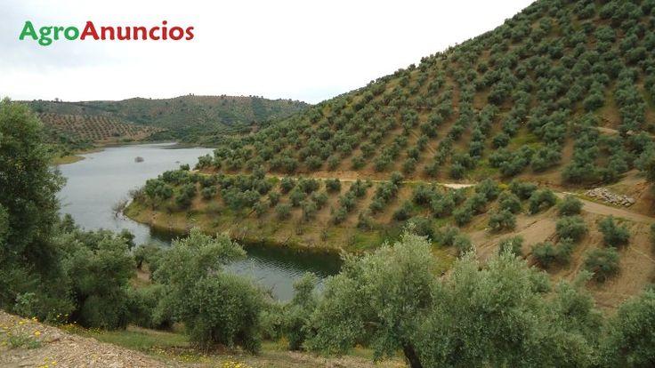 Venta de Finca con olivos hojiblanca en Córdoba