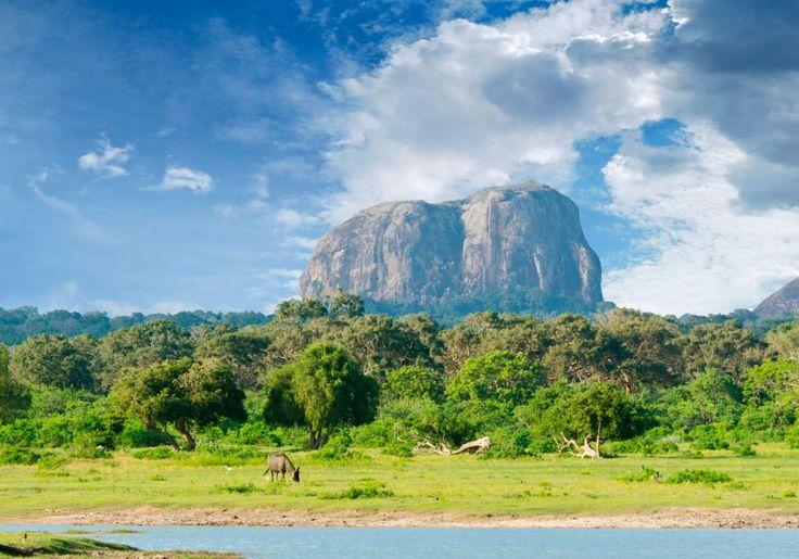 Sigiriya klippen i Sri Lanka er lidt af en oplevelse, og den ligger helt fantastisk!