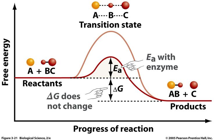 Catalyst: speeds up a chemical reaction by lowering the activation energy Ea of the overall reaction; it will not affect the enthalpy of either the reactants or the products however
