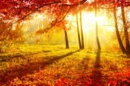 """From the website Time and Date (http://www.timeanddate.com/calendar/september-equinox-customs.html): """"September equinox holidays and traditions"""" -- Explains what the Autumn Equinox is and how it was/is celebrated by many cultures around the world and in history."""