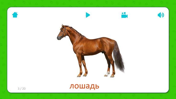 Карточки для детей - Лошадь (Horse)  - Домашние животные. Бесплатная установка приложения для iOS и Android: http://onelink.to/flashcardsforkid