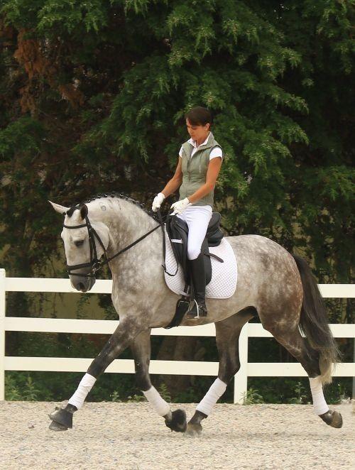 Dressage horses are so elegant. <3