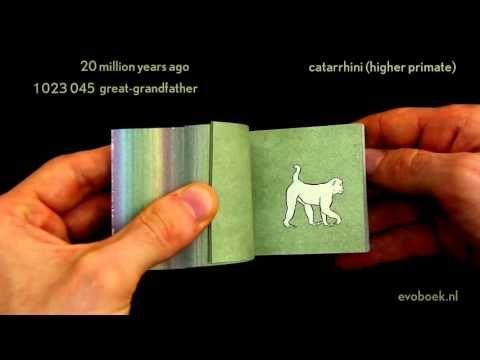 550 million years of human evolution flipbook - YouTube