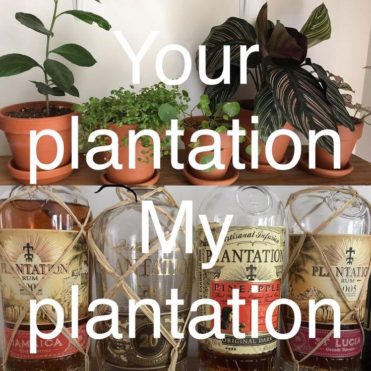 Your plantation vs My plantation! #rum #win #DiscoverRum #cocktails #cocktail #drinks
