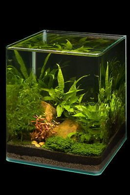 Dennerle Nano Cube 20L Aquarium Panorama Shrimp Tank