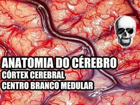 Vídeo Aula 134 - Sistema Nervoso/Neuroanatomia: Anatomia do Cérebro (Córtex Cerebral) - Telencéfalo - YouTube