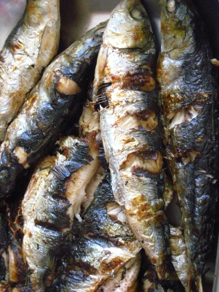 Sardinas. Sardines