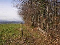[Savoie] VTT-FFCT du Pays du lac d'Aiguebelette - Parcours N°32 : Autour du Thiers Circuit VTT balisé n°32.  Départ du rond-point au centre de St-Béron. Suivre le balisage de randonnée direction La Girondière. Après 200 m sur la route principale, prendre à droite au niveau d'un accès à un immeuble. Continuer sur le chemin principal. Il borde une ferme puis traverse en face entre deux prés et débouche dans un petit passage boisé, parfois humide. Après les premières maisons, prendre à droite…