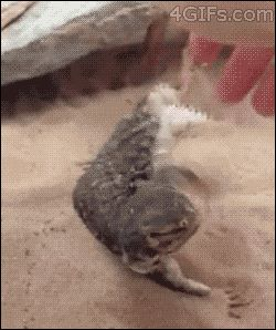 And you could teach it tricks | 16 Reasons Why We Want A Pet Dragon