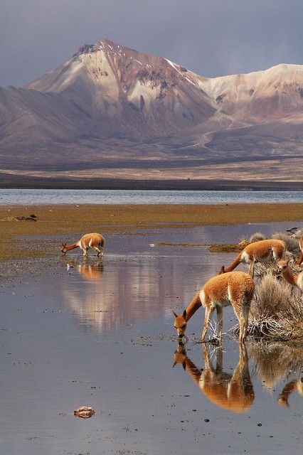 Lauca National Park . Chile