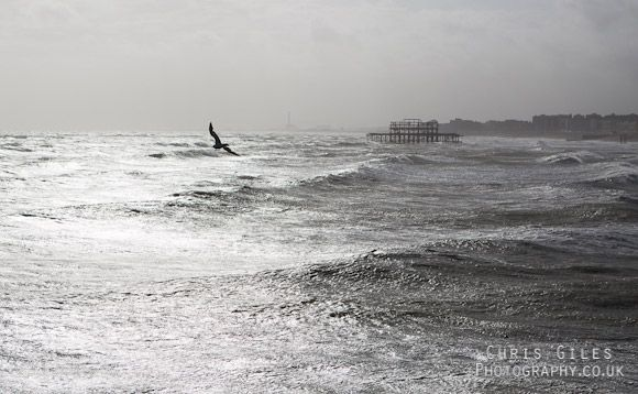 A seagull flying over the sea with the derelict West Pier, Brighton in the background