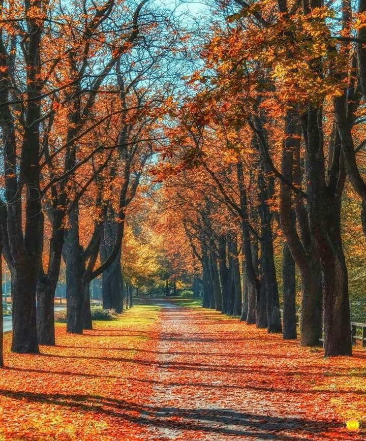 Herbstallee in Goslar am Zwingerwall