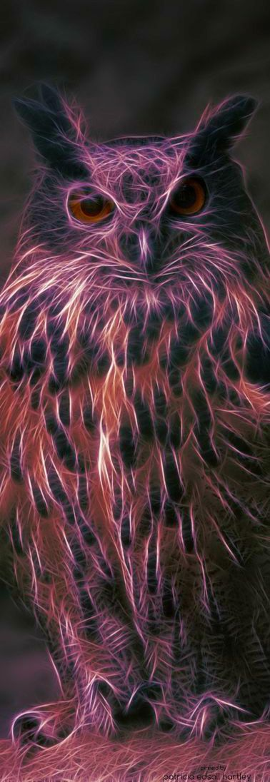 Bird Watching | House of Beccaria~