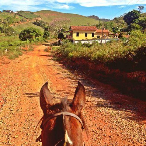 Roça lirios do campo.: Eu nasci no campo longe da cidade Meus primeiros a...